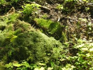 All dumping av gress og hageavfall er strengt forbudt.