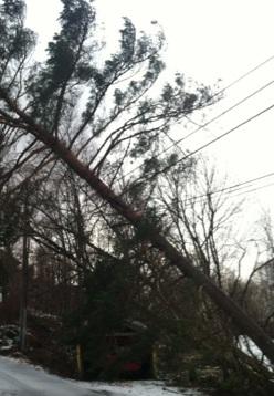 Trær som har falt over ledninger