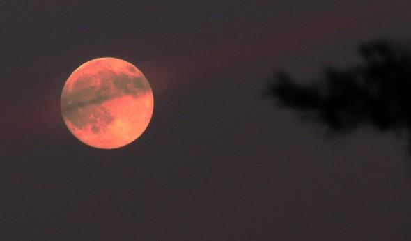 Strawberry moon 3
